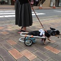 This is love, Tokyo, Japan
