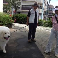 A rare sight in Tokyo